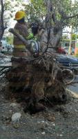 Boca del R�o, Ver., 5 de marzo de 2015.- En la Plaza Vela en este municipio, las fuertes rachas derribaron una estructura met�lica y afect� a tres veh�culos estacionados. En las calles de Maltrata y Diego de Ordaz de la colonia Rigo, un �rbol cay� sobre un Chevy color negro, el cual estaba estacionado.