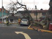 Xalapa, Ver., 6 de marzo de 2015.- Para retirar el �rbol ca�do en el estacionamiento del Super Che ubicado en la avenida 20 de Noviembre, acudieron elementos de Bomberos y Protecci�n Civil.
