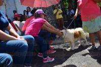 Xalapa, Ver., 1 de agosto de 2015.- Pasarela de adopci�n de perros, organizada por el Ayuntamiento de Xalapa en coordinaci�n con el Centro de Salud Animal, efectuada en Los Lagos.