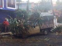 Xalapa, Ver., 4 de agosto de 2015.- La tarde de este martes un �rbol cay� sobre una camioneta en la avenida Villahermosa esquina con calle Sur 4; cuerpos de bomberos y PC trabajan para retirarlo.