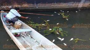 Boca del R�o, Ver., 9 de octubre de 2015.- Pescadores recogieron los peces que aparecieron flotando a un lado del buque Guanajuato; aseguraron que los peces fueron dejados en el lugar por alg�n pescador que se deshizo de ellos, pues esta especie no es comercial.