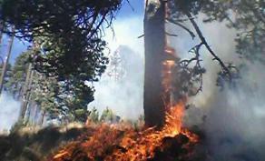 Tlachichuca, Pue., 9 de febrero de 2016.- Comuneros que pidieron el anonimato por temor a represalias, presentaron fotograf�as en las que se aprecia la forma en que el fuego consumi� �rboles de especies protegidas -de todos los tama�os-, dentro del Parque Nacional del Pico de Orizaba.