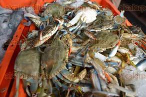 Xalapa, Ver., 12 de febrero de 2016.- Primer viernes de Cuaresma, temporada en que las pescader�as incrementan sus precios, que van desde los 50 pesos el kilo de camar�n con c�scara hasta el r�balo que cuesta 175 pesos.