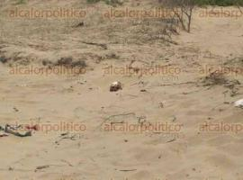 Coatzacoalcos, Ver., 2 de mayo de 2016.- En el fraccionamiento Punta Caracol, cerca del acceso al malec�n, 2 hombres encontraron un cr�neo humano y ropa de hombre, posteriormente m�s huesos fueron localizados.