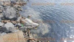 Coatzacoalcos, Ver., 1 de julio de 2016.- Una gran mancha aparentemente de combustible permanece en aguas del R�o Coatzacoalcos desde hace tres d�as, pescadores de la zona comentaron que no han podido capturar nada, pues no hay especies marinas cerca de la orilla.
