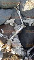 Veracruz, Ver., 23 de julio de 2016.- En las escolleras de la playa Villa del Mar se encontraron los restos de un pel�cano. Al principio, las autoridades recibieron un reporte de hallazgo de restos humanos; sin embargo, al llegar al lugar desmintieron dicha versi�n.