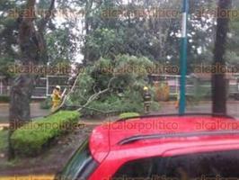 Xalapa, Ver., 29 de agosto de 2016.- Ca�da de �rbol sobre la avenida Xalapa, a la altura de la Facultad de Econom�a, por la intensa lluvia registrada la tarde de este lunes.