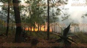 Ayahualulco, Ver., 20 de enero de 2017.- Este viernes se registraron 2 incendios en este municipio, uno en el paraje Cerro de Altamirada y otro en Cajas de Agua, los cuales ya son atendidos. Igualmente se registró un incendio que ya fue controlado totalmente en el paraje Barranca de los Alcohólicos, en Perote.