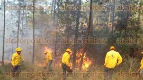 Perote, Ver., 23 de marzo de 2017.- Brigadistas de CONAFOR, Gobierno del Estado y ejidatarios de Los Molinos, combaten un incendio forestal registrado la tarde de este jueves, reportando un 20% de control. Con este siniestro suman 77 en lo que va del año con mil 86 hectáreas afectadas en la entidad.