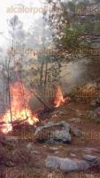 San Andrés Tenejapan, Ver., 30 de marzo de 2017.- 15 hectáreas de vegetación arbustiva, pastizal y arboledas están siendo afectadas por un incendio generado en el cerro Petlalcala.
