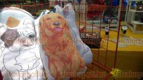 """Xalapa, Ver., 29 de abril de 2017.- Familias y sus mascotas disfrutan de un sinfín de actividades del Animal Fest Xalapa que se desarrolla este 29 y 30 en el parque """"Doña Falla""""; hay productos para el cuidado, alimentación y accesorios para las mascotas."""