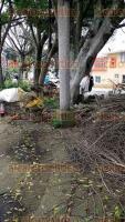 Xalapa, Ver., 19 de julio de 2017.- Lectora denuncia tala de árboles en parque de avenida Américas; exhibe que las personas que los cortan aseguran ser del Ayuntamiento pero no muestran identificación que lo avale. Sólo quedan ya 3 árboles.