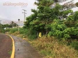 Veracruz, Ver., 20 de julio de 2017.- El enorme socavón dejó al descubierto una tubería de colector pluvial. Además, la laguna está cubierta de lirio y los alrededores de la pista de atletismo están llenos de hierba.