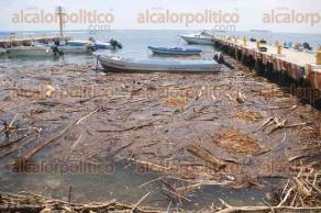 Veracruz, Ver., 16 de agosto de 2017.- El muelle de pescadores, en este Puerto, se encuentra lleno de palizada a consecuencia de la creciente de los ríos. Algunas lanchas han sufrido afectaciones por el golpeteo de la marea.