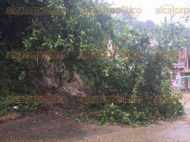 Papantla, Ver., 24 de septiembre de 2017.- Cerro de la calle 5 de Mayo está apunto de deslavarse; cuenta con una gran cantidad de árboles, ramas y arbustos, lo que incrementa el peligro de un derrumbe de fatales consecuencias.