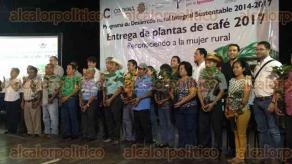 Córdoba, Ver., 17 de octubre de 2017.- Más 400 mil plantas de café, fueron entregadas este martes a más de 600 productores cafetaleros como parte del Programa de Desarrollo Rural Integral Sustentable 2014-2017, a través del cual se han entregado ya más de cuatro millones de matas de café resistentes a la roya.