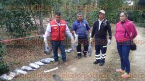 Huatusco, Ver., 15 de enero de 2018.- Este fin de semana se efectuó el peritaje del área en donde fueron encontrados muertos decenas de perros y zopilotes, en la colonia Xocotla.
