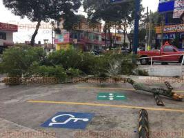 Xalapa, Ver., 23 de febrero de 2018.- La rama de un árbol cayó sobre la avenida Américas, la tarde de este viernes. Automovilistas la retiraron y la dejaron en el estacionamiento de una farmacia, en la esquina con Laureles. Personal de Protección Civil acudió al sitio.