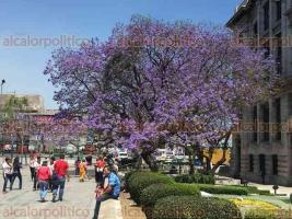Ciudad de México, 23 de marzo de 2018.- La Alameda Central es adornada por jacarandas y dan un paisaje maravilloso para los capitalinos y visitantes.