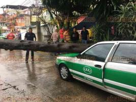 Xalapa, Ver., 21 de junio de 2018.- La tarde de este jueves se cay� un �rbol en la calle Ni�os H�roes; da�ando un taxi.
