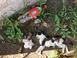 Veracruz, Ver., 18 de julio de 2018.- En el Parque Ecol�gico de la ciudad de nueva cuenta se ha registrado mortandad de gatos.