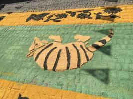 Teocelo, Ver., 14 de agosto de 2018.- Previo a la bajada del arco, como parte de la fiesta en honor a la Asunción de la Virgen María, se aprecia la alfombra artesanal en la calle Cinco de Mayo de este municipio.