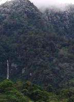 Misantla, Ver., 17 de noviembre de 2018.- Heladas en la Sierra de Misantla dañaron plantíos de café, denunciaron productores de la zona. Piden a las autoridades comenzar a evaluar la aplicación del Seguro Catastrófico ante la pérdida de cosechas.