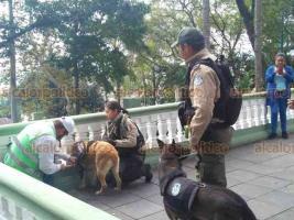 Xalapa, Ver., 17 de diciembre de 2018.- Durante recorrido de seguridad que realizaban binomios caninos de la Fuerza Civil, uno de los perros se quedó atorado en la balaustrada del parque Juárez, afortunadamente fue liberado sin causarle alguna lesión.