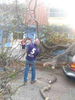 """Veracruz, Ver., 19 de enero de 2019.- Personal de Protección Civil atendió la caída de un árbol causada por el violento """"norte"""", en la calle Yáñez esquina Civismo."""