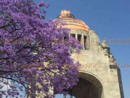 Ciudad de México, 21 de marzo de 2019.- Las calles de la ciudad son embellecidas por el árbol de jacarandas mimosifolia, importado a México por el japonés Tatsugoro Matsumoto para adornar jardines y parques por petición del presidente Porfirio Díaz.