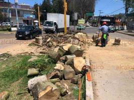 Xalapa, Ver., 26 de marzo de 2019.- Ayuntamiento cerró parcialmente la avenida 1° de Mayo por la tala de un árbol laurel de la india, muerto, entre la avenida Lucio Blanco y la calle Prolongación de Arquitectos.