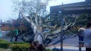 Xalapa, Ver., 18 de abril de 2019.- Este jueves las rachas de viento derribaron un árbol y el poste de una luminaria que cayeron sobre un auto que pasaba cerca del cruce de las avenidas Ruiz Cortines e Ignacio de Llave, frente al Súper Che; no se reportan lesionados.