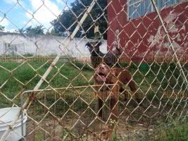 Xalapa, Ver., 23 de agosto de 2019.- Este viernes, vecinos denunciaron la muerte de una perra en un domicilio de la calle Río Nilo, en la colonia Carolino Anaya, temen que otros perros la devoren, pues acusan que su dueño los maltrata.