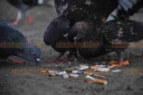 Boca del Río Ver., 15 de septiembre de 2019.- La playa Santa Ana es de las más visitadas y de las contaminadas por colillas de cigarros. Según algunas ONG, una sola colilla puede contaminar 8 litros de agua de mar y hasta 50 de agua potable. Además, aves podrían comerlas.