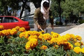 Ciudad de México, 15 de octubre de 2019.- La flor de cempasúchil adorna el camellón central de la avenida Paseo de la Reforma en la ciudad con motivo de la festividad de Día de Muertos.