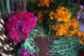 """Xalapa, Ver., 21 de octubre de 2019.- A unos días de la celebración de Los Fieles Difuntos, ya empieza a comercializarse la flor de cempasúchil en el mercado """"San José"""". Los precios varían de 80 a 60 pesos el rollo."""