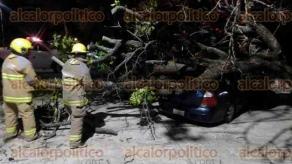 Veracruz, Ver., 22 de octubre de 2019.- En la avenida Salvador Díaz Mirón, a la altura del fraccionamiento Electricistas, se presentó la noche de este martes la caída de un árbol sobre un carro tipo Corsa que estaba estacionado. Al parecer las rachas de viento por el norte generaron que cedieran sus raíces.