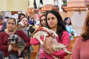 Xalapa, Ver., 17 de enero de 2020.- Este viernes, se realizó una misa en honor a San Antonio Abad, protector de los animales, en la Rectoría de los Sagrados Corazones. En este acto religioso, se bendijeron 50 mascotas, entre ellos perros, aves y hasta un conejo.