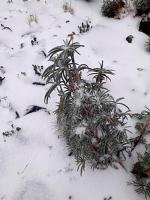 Perote, Ver., 24 de enero de 2020.- El Cofre de Perote nuevamente se vistió de blanco, al registrarse una nueva nevada en su peña, a 4 mil 200 metros sobre el nivel del mar.