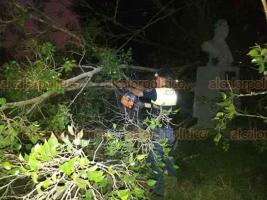 Xalapa, Ver., 28 de enero de 2020.- La tarde-noche de este martes, se reportó la caída de un árbol a un costado del Estadio Xalapeño, en la calle Salvador Díaz Mirón; al lugar acudió personal de Protección Civil.
