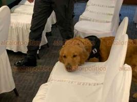 Xalapa, Ver., 28 de febrero de 2020.- Samantha, integrante del K9, inspeccionó equipo y bolsos de periodistas previo a la Conferencia Nacional de Procuración de Justicia de este viernes.