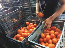 Veracruz, Ver., 31 de marzo de 2020.- En la zona de mercados, vendedores de frutas y verduras dan el kilo de tomate en 10 pesos, mientras que en cadenas de supermercados como Soriana cuesta el triple. Locatarios aseguran sus precios no durarán mucho y que en el transcurso de la semana aumentará drásticamente.