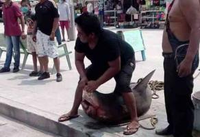 Veracruz, Ver., 8 de abril de 2020.- Pescadores de la zona de Villa del Mar atraparon un tiburón toro, el cual posteriormente fue llevado al mercado de pescadería para ser destazado y vendido.