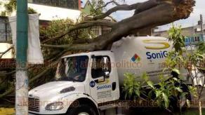 Xalapa, Ver., 29 de mayo de 2020.- Los fuertes vientos de este viernes derribaron un árbol en la calle Antonio M. Quirasco, casi esquina con avenida Ciudad de Las Flores, en la colonia Revolución. Cayó sobre una pipa de la compañía Soni Gas, no hubo lesionados.