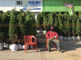 """Veracruz, Ver., 25 de noviembre de 2020.- Locatarios del mercado """"Polvorín"""" defendieron a vendedores de pinos para que permanezcan afuera del inmueble, pues el Ayuntamiento pretendía reubicarlos."""