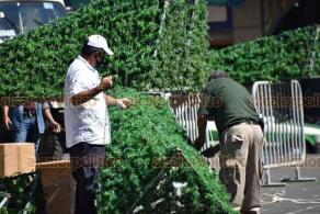 Xalapa, Ver., 26 de noviembre de 2020.- Continúa la instalación de adornos y el árbol navideño en el Centro de la Capital.