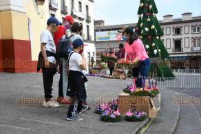 Xalapa, Ver., 29 de noviembre de 2020.- Tras llegar a un acuerdo con inspectores del Ayuntamiento, comerciantes continúan las ventas de coronas de Adviento en las escalinatas de la Catedral.