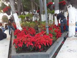 Veracruz, Ver., 29 de noviembre de 2020.- Las jardineras del Zócalo comenzaron a ser adornadas con flor de Nochebuena. Se colocan también arcos y el pino navideño.