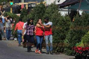 Veracruz, Ver., 2 de octubre de 2020.- Los pinos naturales también subieron de precio; en 2019 los costos oscilaban entre los 600 y 700 pesos. Hoy cuestam aproximadamente mil 300 pesos por pieza.
