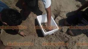 Coatzacoalcos, Ver., 18 de abril de 2021.- Dos tortugas lora desovaron en dos diferentes puntos de las playas de Coatzacoalcos este domingo. Elementos de Protección Civil resguardaron más de 200 huevos.